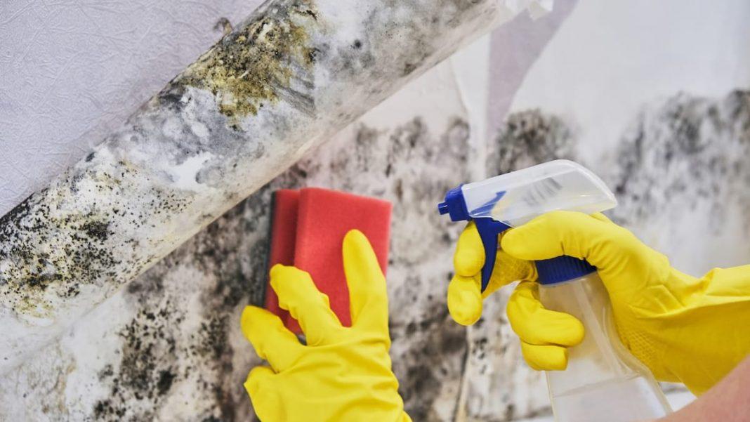 Penészes fal tisztítása